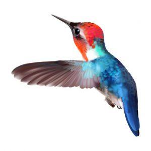 Hummingbird Update in 2013 verändert die Alogirthmen
